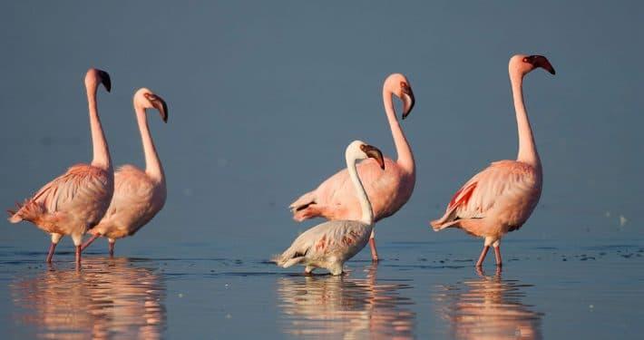 Birdlife Botswana