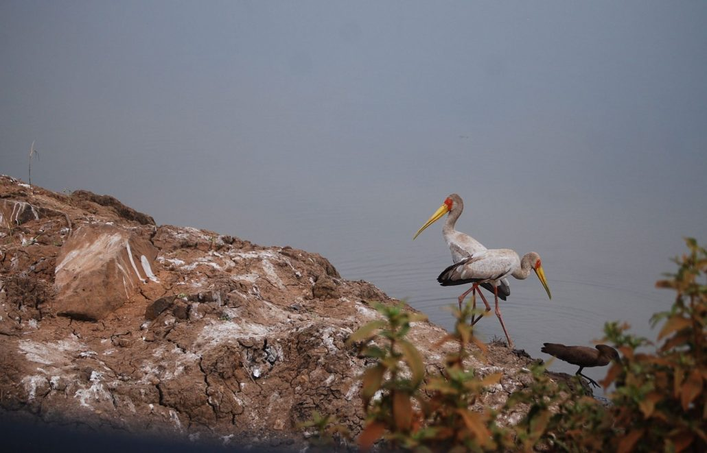 Birds in Gambella National Park