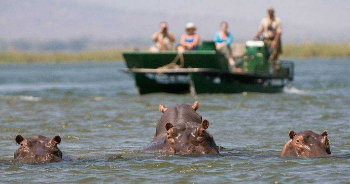 Hippos in Mana Pools