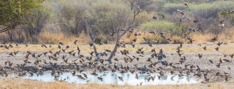 Manyelanong Game Reserve birds