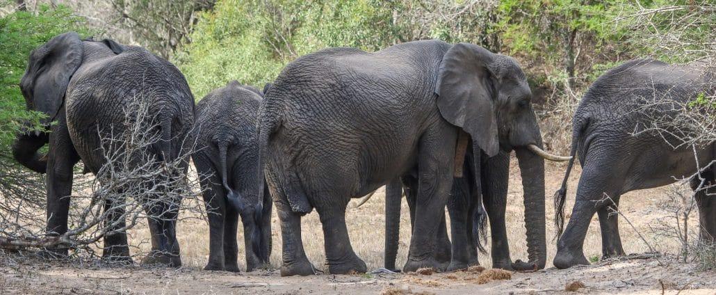 Tembe Safaris Elephants