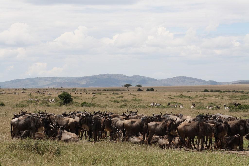 masai mara safari kenya