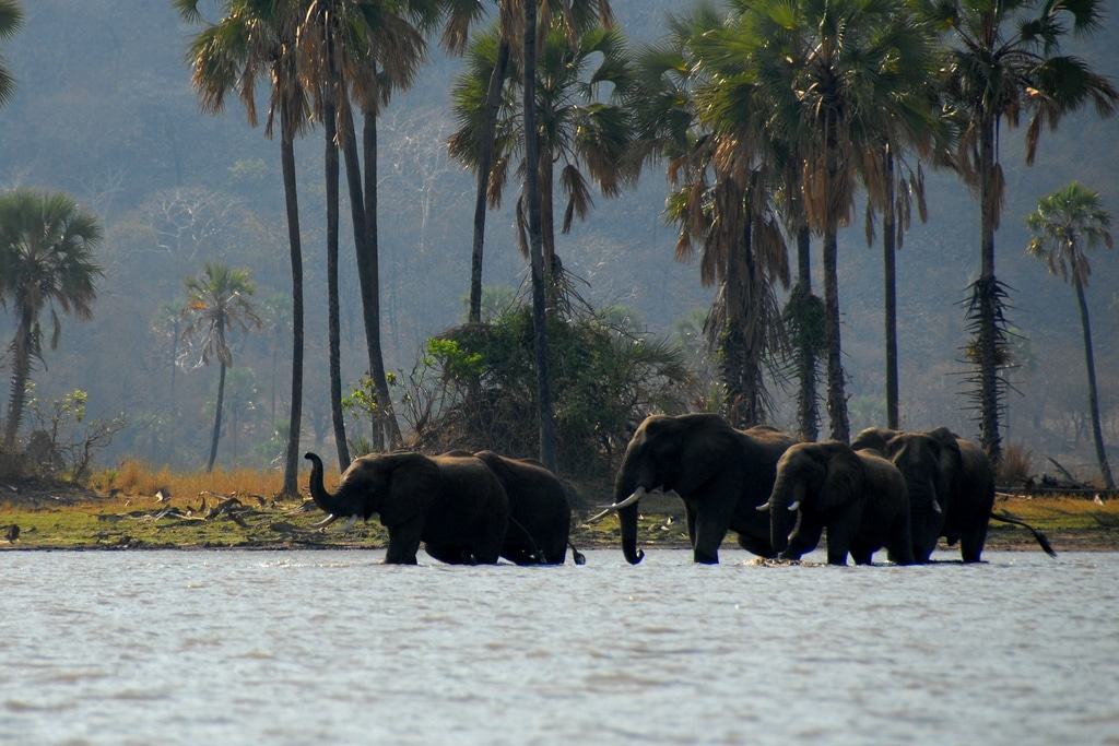 Africa Travel Specialist | Expert Travel Specialists for Africa safari & holidays