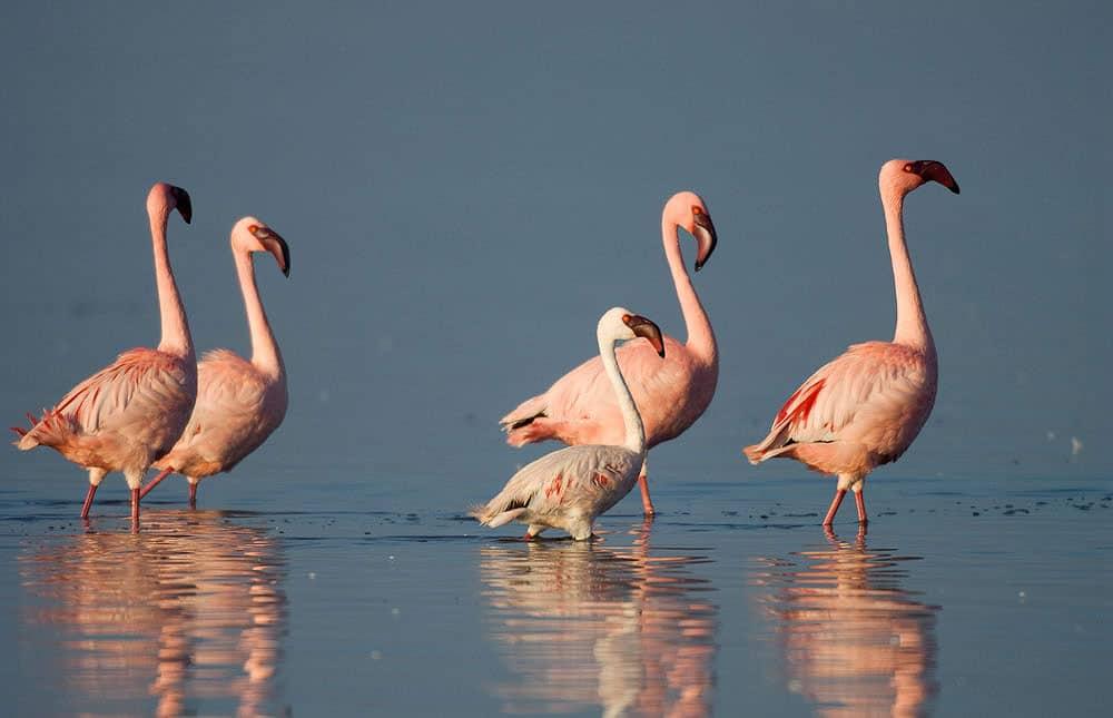 Bird life Botswana