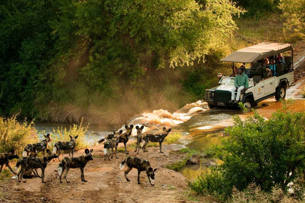 Wild Dogs at Madikwe Game Reserve