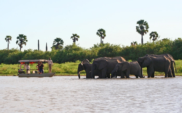 Boat cruise and Elephant on the Rufiji River