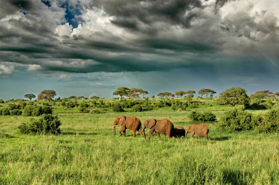 Elephants and a storm in Tarangire
