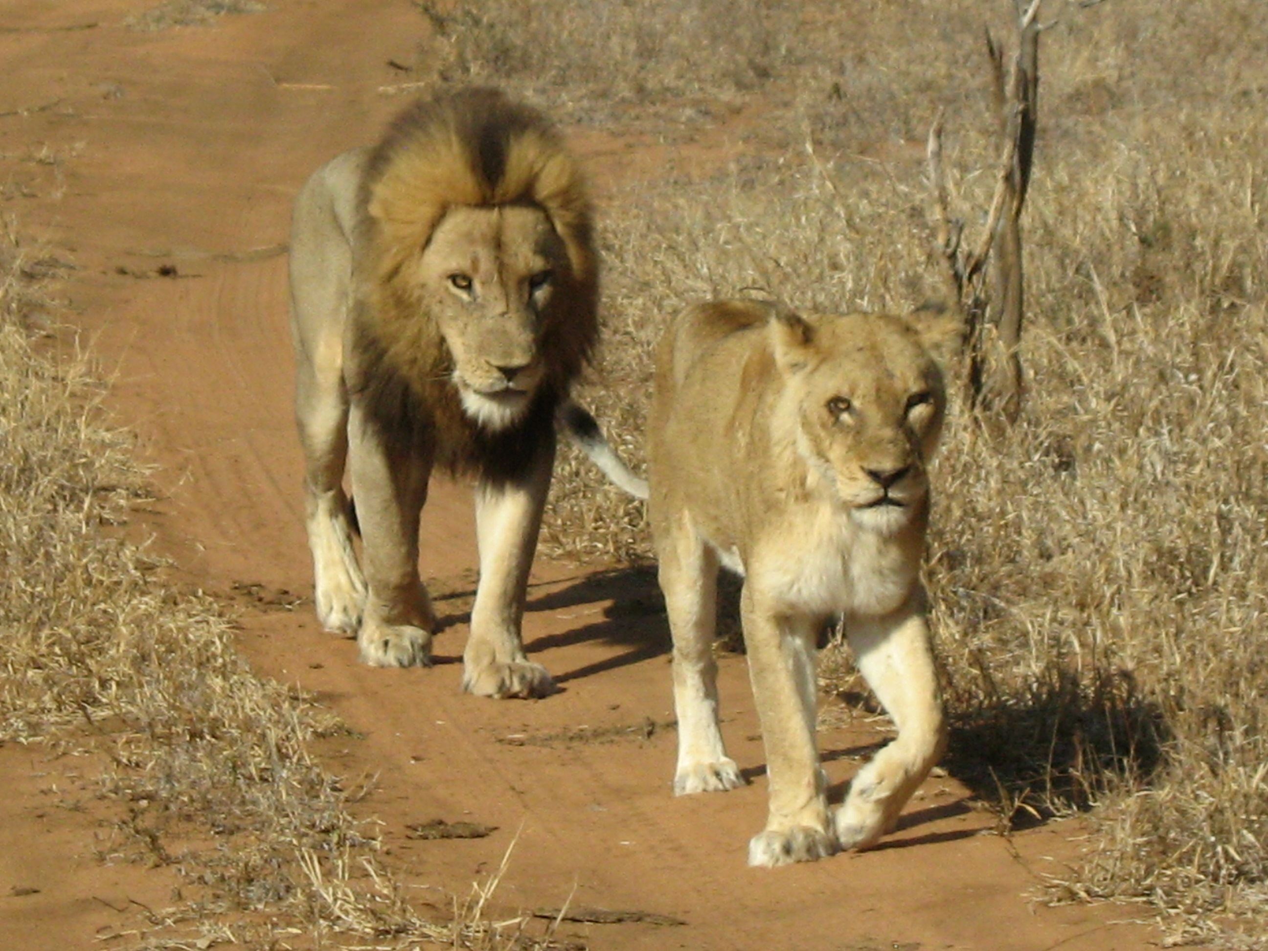 One of the Big 5 in the Greater Kruger area