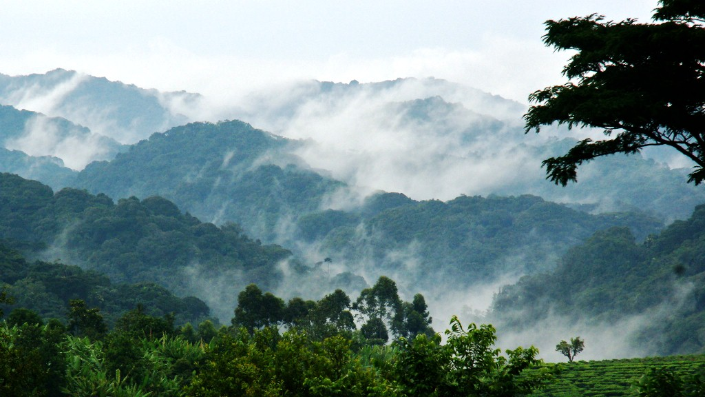 Mist on the mountains of Bwindi National Park