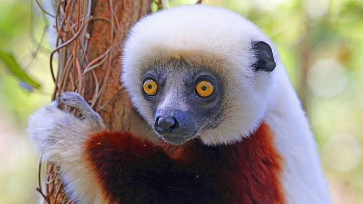 Lemur s are unique to Madagascar