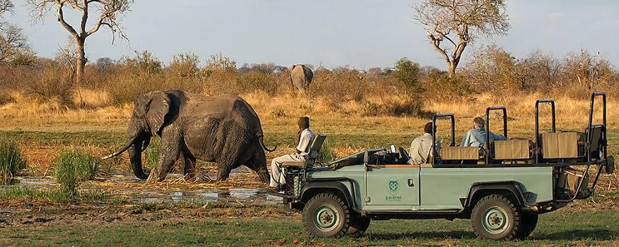 Elephant near Lukimbi