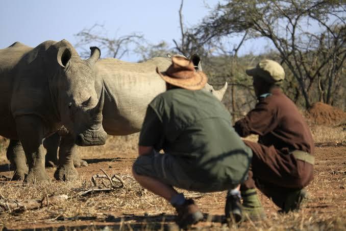 White Rhino in Mkhaya