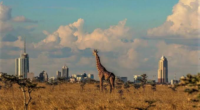 NBairobi National Park houses the closest safari to a capital city in the world