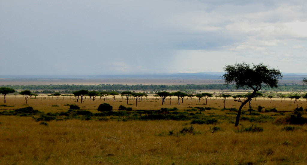 Masai Mara rain on the wide open safari plains