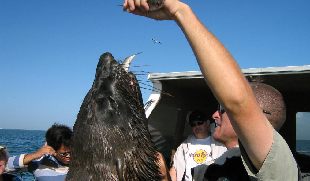 Seal on the boat during a seal cruise