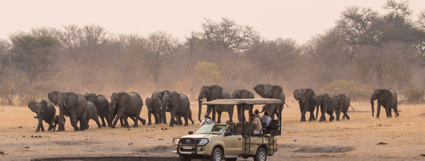This family herd are just a few individuals of the 50000 elephants in Hwange