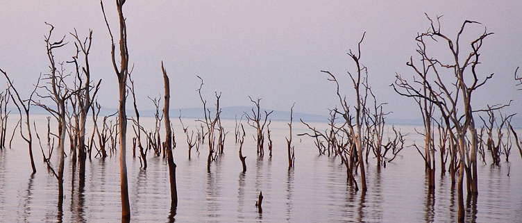Forest of dead trees on Lake Kariba. The trees died as the water levels rose after the dam wall was completed